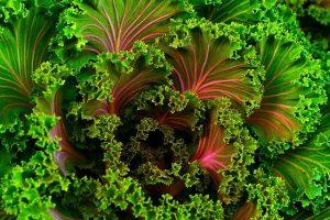 מתחברים אל הטבע ולומדים לאכול מזון טרי