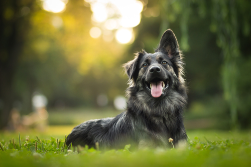 עיקור כלבה - כל מה שצריך לדעת