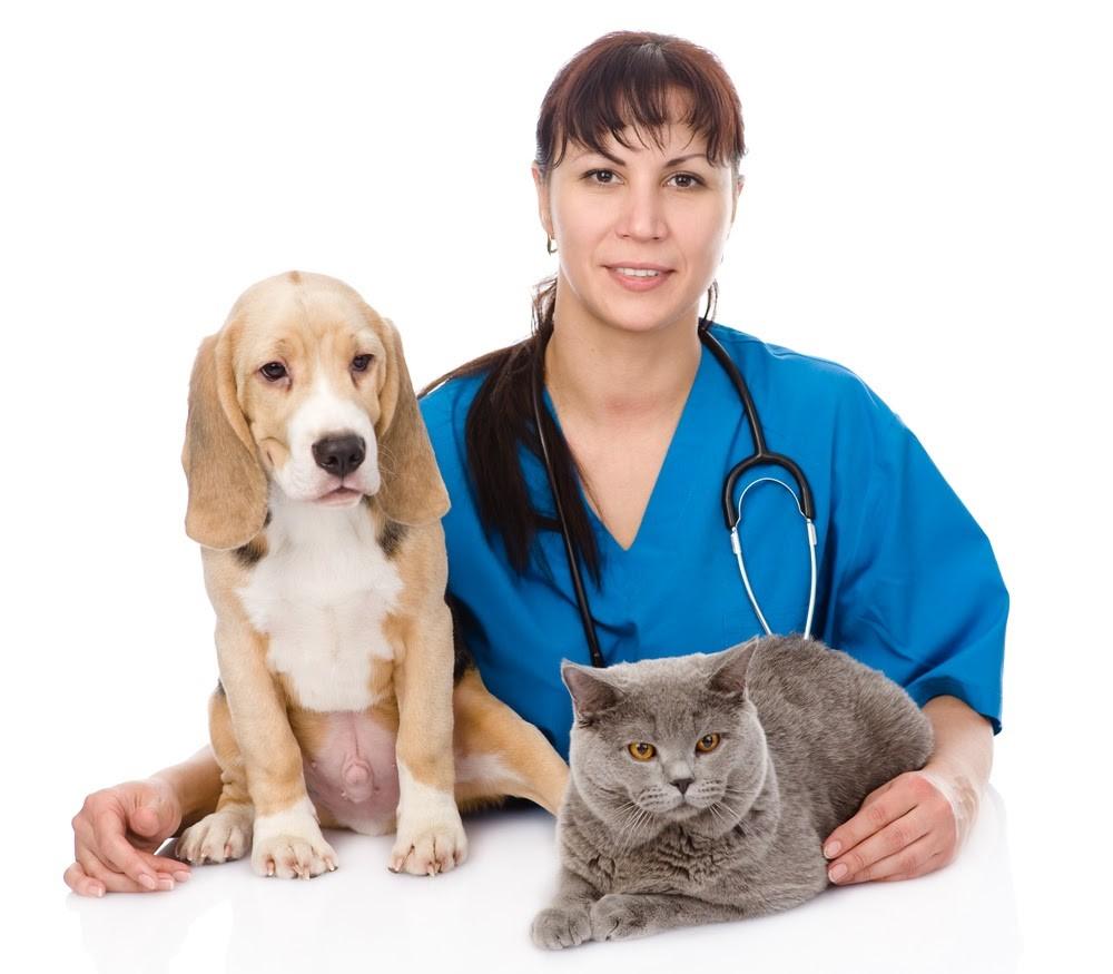 סירוס כלבים וחתולים - איך מתנהל התהליך?